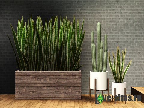 Cactus and Snake Plants от Gelina